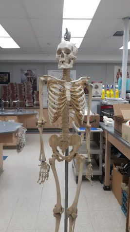 How Accurate are Decoration Skeletons?